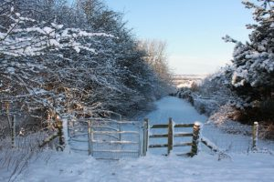 Photograph of a gate at Coxhoe Woods in winter