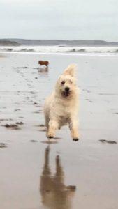 Photograph of dog running along a beach