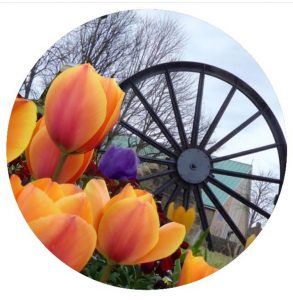 Round pit wheel and tulips