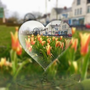 tulips on village green taken through a heart feature