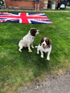 Two dogs with union jack dickie bows